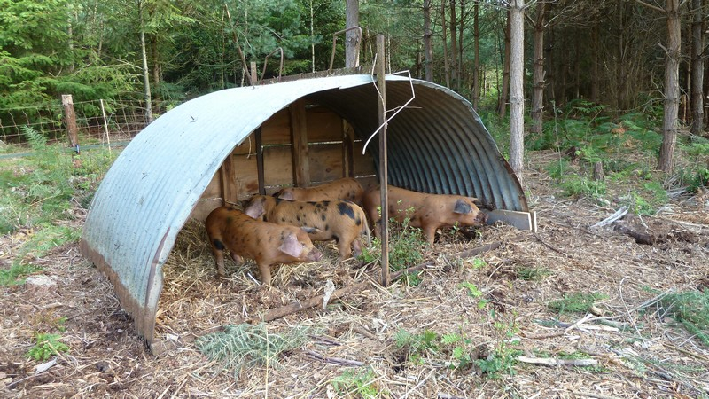 weaners in the ark